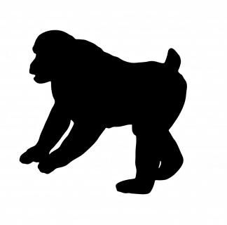 猿01.JPG