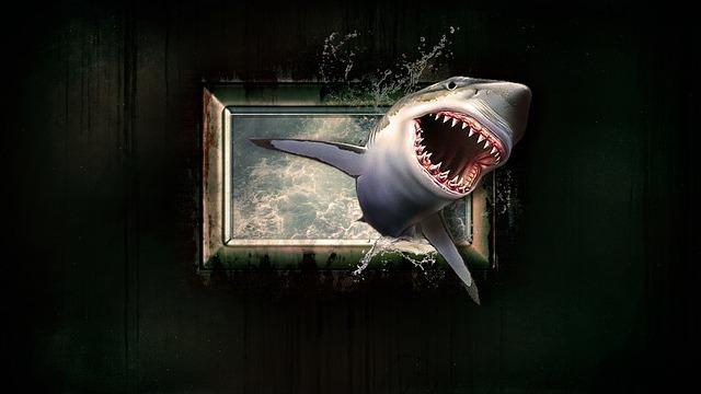 shark-1626288_640.jpg
