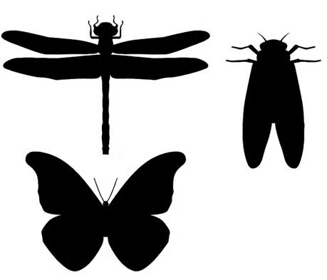 昆虫00.JPG