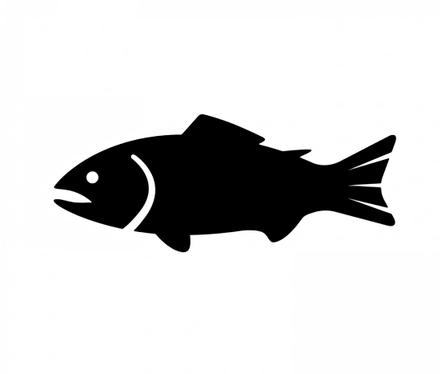 【衝撃】魚にも人間と似た睡眠サイクルがあることが判明!!睡眠の謎を解明する大きな手がかりに・・・