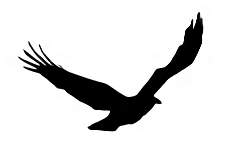 鳥03.jpg