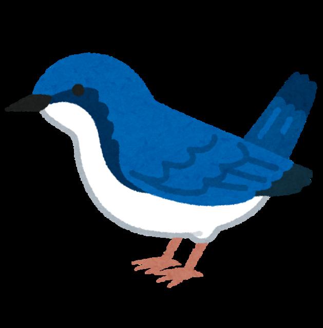 bird_koruri.png