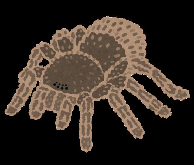 bug_kumo_tarantula.png