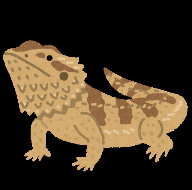 lizard_futoagohigetokage.png